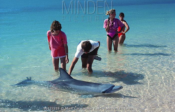 Tourists with Bottlenose dolphin in shallows, Monkey Mia, Western Australia  -  Mark Carwardine/ npl