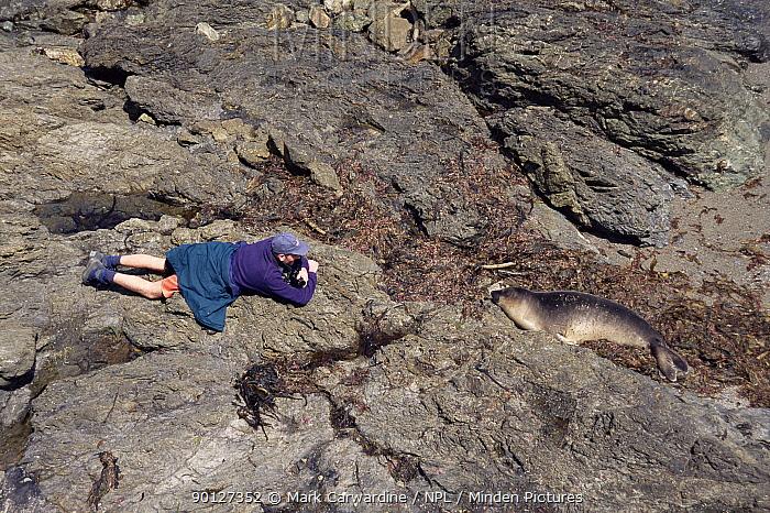 Photographer watching Northern elephant seal (Mirounga angustirostris) Mexico  -  Mark Carwardine/ npl