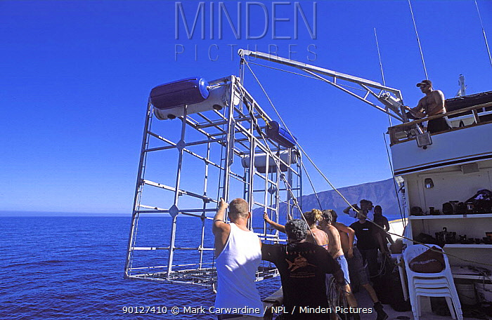 Lowering diving cage into the sea for viewing Great white shark, Guadalupe Island, Mexico (North Pacific)  -  Mark Carwardine/ npl
