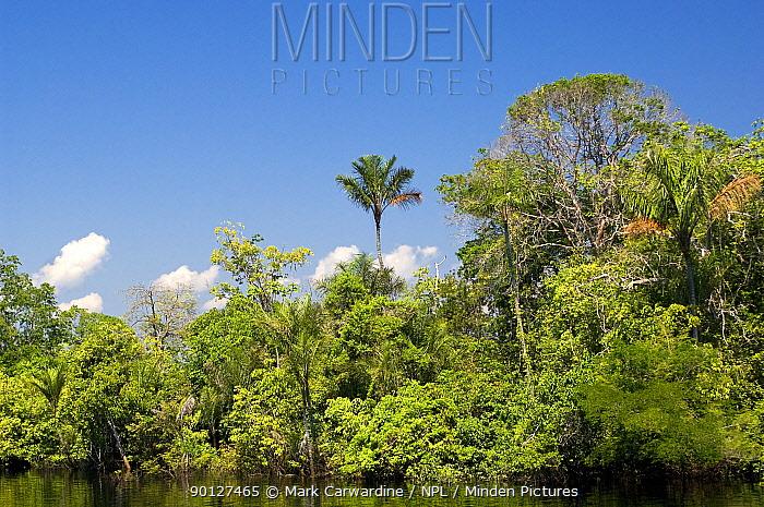 Rainforest along the Rio Negro river, Amazon basin, Brazil  -  Mark Carwardine/ npl