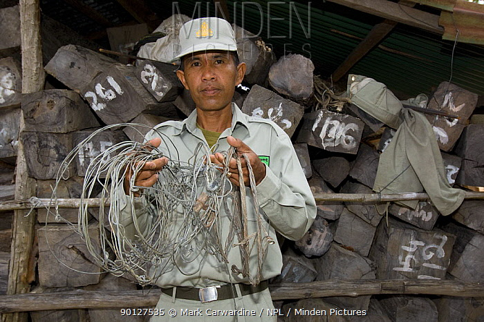 Ranger with confiscated snares in front of confiscated timber, Preah Monivong Bokor National Park, Elephant Mountains, south-western Cambodia (formerly Kampuchea)  -  Mark Carwardine/ npl