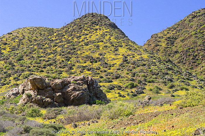 West San Benitos Island, San Benitos archipelago, Baja California, Mexico  -  Mark Carwardine/ npl