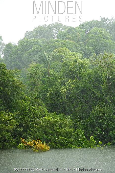 Heavy tropical rain in the rainforest, Rio Aripuana, Amazonia, Brazil  -  Mark Carwardine/ npl