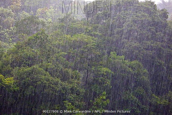 Heavy tropical rain in rainforest, Rio Aripuana, Amazonia, Brazil  -  Mark Carwardine/ npl