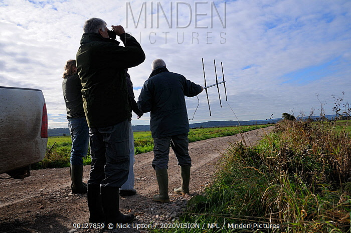 Great Crane Project staff radiotracking Common, Eurasian cranes (Grus grus) recently released onto the Somerset Levels and Moors Somerset, UK, October 2010  -  Nick Upton/ npl
