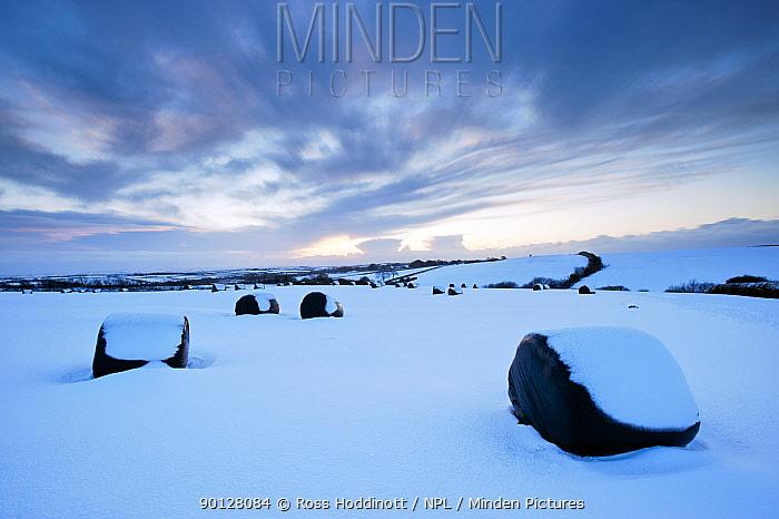 Snow covered silage bales in field, evening light, near Bradworthy, Devon, England, UK January 2010  -  Ross Hoddinott/ npl