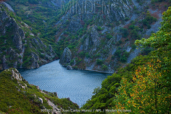 Narcea river, Calabazos Reservoir, Asturias, northern Spain, November 2009  -  Juan Carlos Munoz/ npl