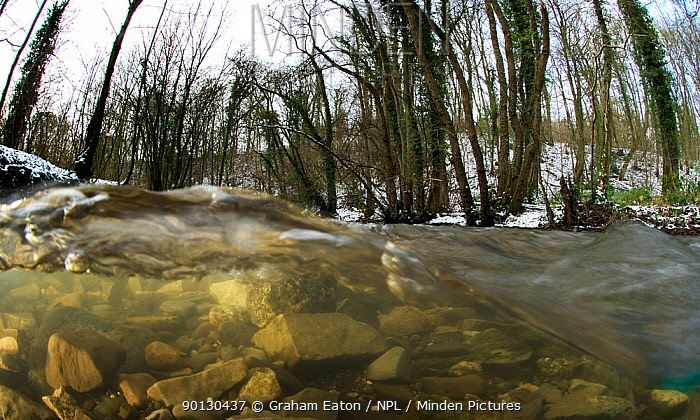 A split-level view of a fast flowing limestone stream in a woodland valley, River Aly, Clwyd, Wales, UK December 2009  -  Graham Eaton/ npl