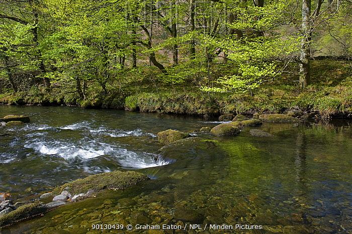View of Afon Glaslyn gorge, Bedgellert, Snowdonia NP, Wales, May 2010  -  Graham Eaton/ npl