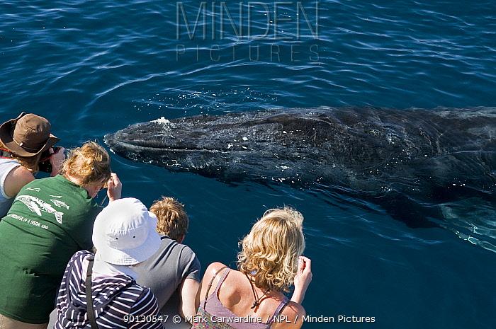 Humpback whale (Megaptera novaeangliae) close to boat, watched by whale watchers, Sea of Cortez, Baja California, Mexico  -  Mark Carwardine/ npl