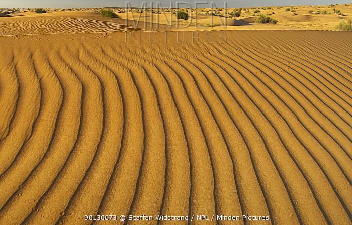Ripples in sand dunes, Dubai Desert Conservation Reserve, Dubai, UAE, February 2002  -  Staffan Widstrand/ npl