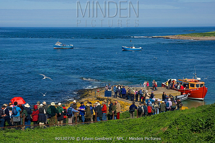 Tourists visiting the Farne Islands, Northumberland, UK to see the colonies of nesting seabirds, June 2008  -  Edwin Giesbers/ npl