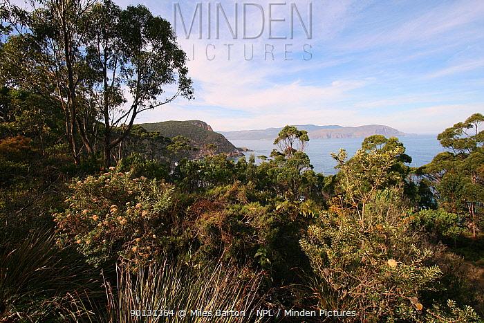 Wet forest from Mt Managana Rd, Bruny National Park, Tasmania, Australia, April 2010  -  Miles Barton/ npl