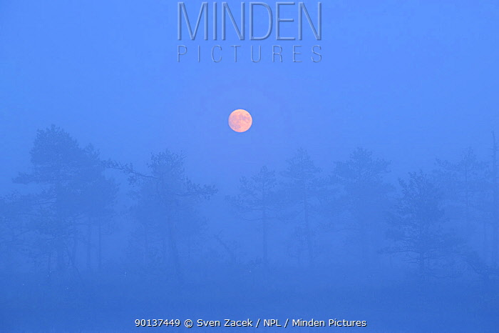 Full moon in mist over forests and marshes Estonia, summer  -  Sven Zacek/ npl
