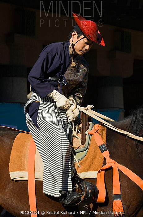 A samurai (warrior) from the Takeda School of Horseback Archery tightens his horse's girth, during the training prior to a Yabusame (Japanese mounted archery), at Meiji Jingu Shrine, Tokyo, Tokyo Prefecture, Japan 2009  -  Kristel Richard/ npl