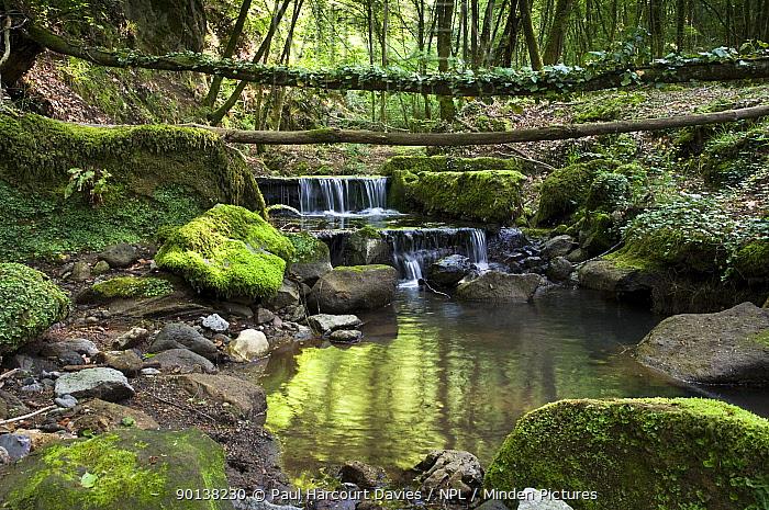 Woodland stream with reflections, Monte Rufeno, Lazio, Italy  -  Paul Harcourt Davies/ npl