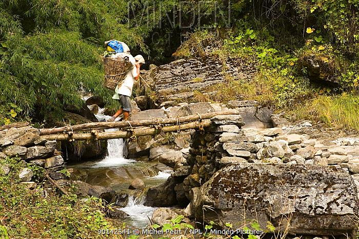 Porter crossing a small bridge over a tributary of the Modi Kola river, Nepal, November 2007  -  Michel Petit/ npl