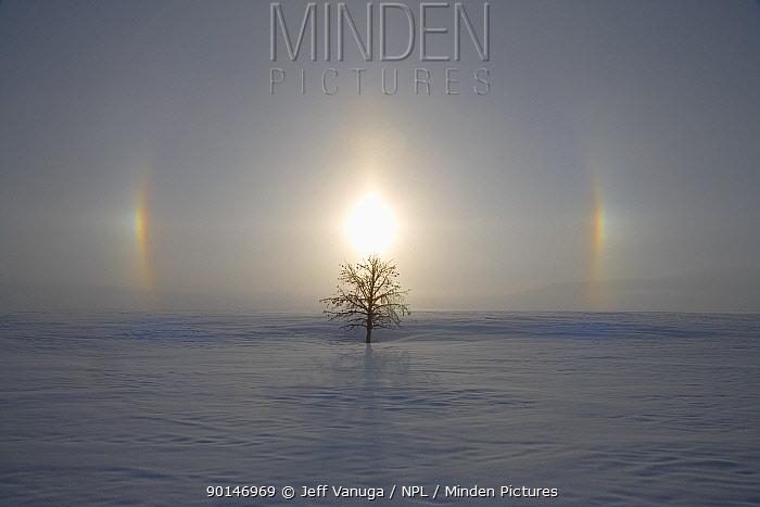 Sun dog, Parhelion shinning on cold winter morning, Antelope Flats, Teton National Park, Wyoming, USA  -  Jeff Vanuga/ npl