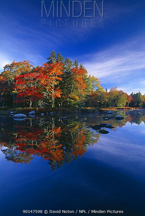 Autumn, Mersey River, nr Kejimkujik National Park, Nova Scotia, Canada  -  David Noton/ npl