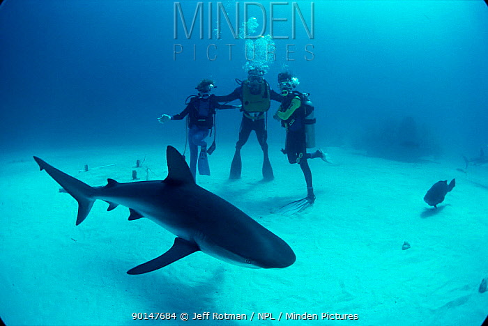 Father and sons observe Caribbean reef shark (Carcharhinus perezi) Bahamas Model released  -  Jeff Rotman/ npl