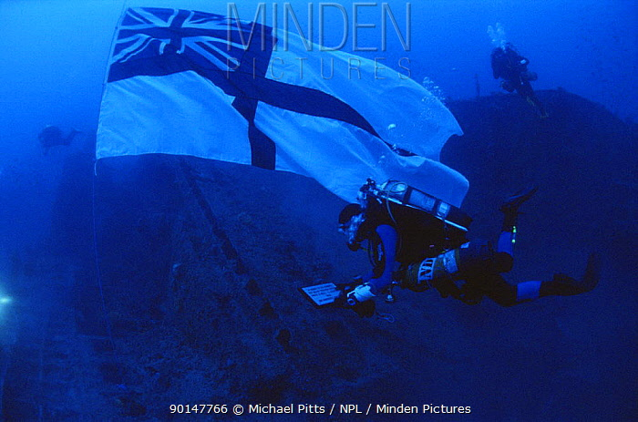 Diver raising the Naval Ensign over the wreck of HMS Manchester, WWII British Cruiser that was scuttled in the Mediterranean Sea after torpedo damage in 1942  -  Michael Pitts/ npl