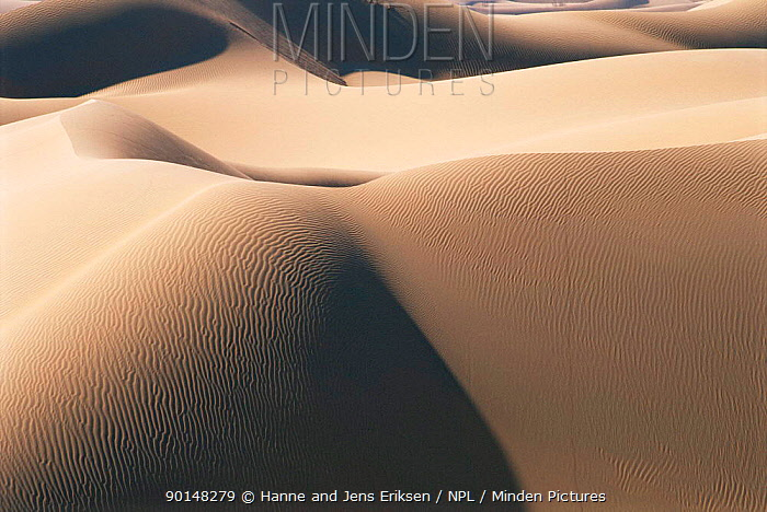 Sand dunes, Barik, Oman  -  Hanne & Jens Eriksen/ npl