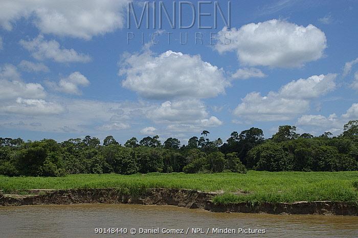 View of the shoreline and grasslands on the Amazonas River in the dry season Brazil  -  Daniel Gomez/ npl