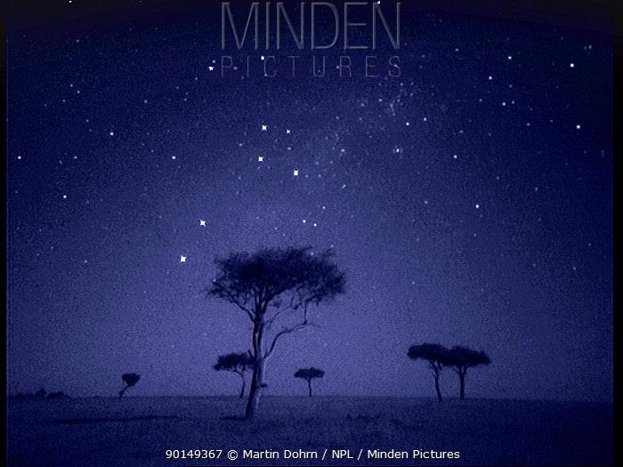 The Southern Cross star constellation shining above Ballenites trees in Masai Mara, Kenya Starlight image intensifier camera image taken with no artificial light  -  Martin Dohrn/ npl
