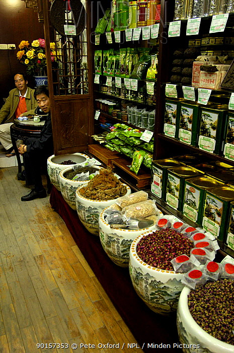 Interior of Beijing Ju Xian Ming Tea Co shop in old neighbourhood of Beijing, China 2006  -  Pete Oxford/ npl