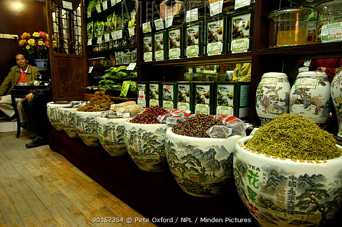 Interior of Beijing Ju Xian Ming Tea Co shop, old neighbourhood of Beijing, China 2006  -  Pete Oxford/ npl