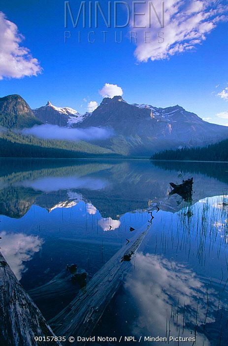 Emerald Lake in Yoho National Park, British Columbia, Canada  -  David Noton/ npl
