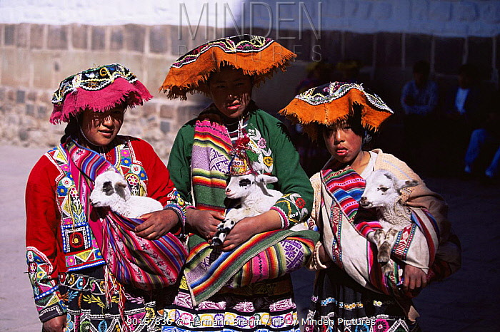 Native Inca children in traditional clothing with baby goats, Cusco, Peru, South America  -  Hermann Brehm/ npl