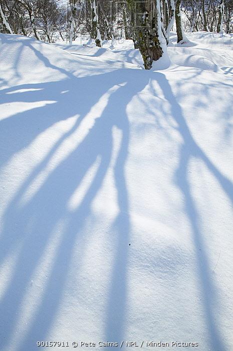Birch woodland in winter with tree shadows on snow, Glen Alladale, Alladale Wilderness Reserve, Ardgay, Sutherland, Scotland, UK, 2006  -  Pete Cairns/ npl