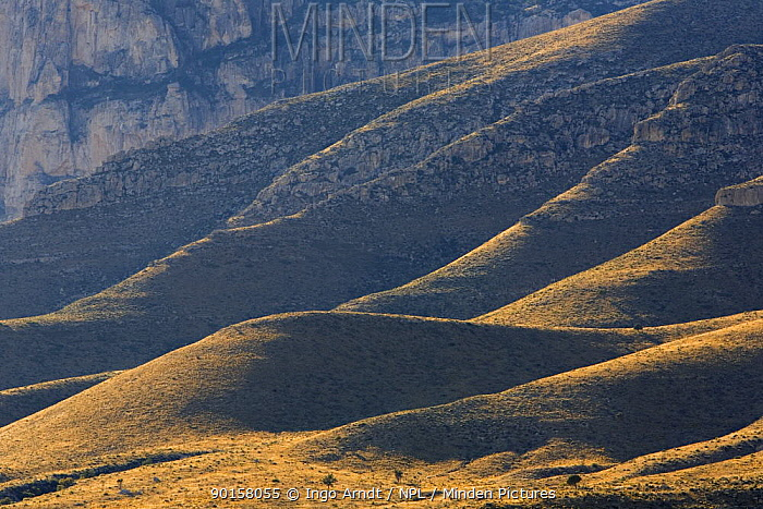 Guadalupe Mountains National Park, Texas, USA  -  Ingo Arndt/ npl