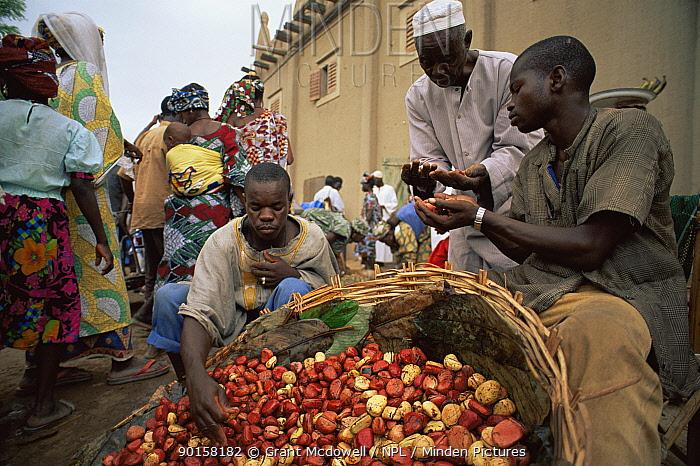 Kola nut seller, Mali, West Africa  -  Grant Mcdowell/ npl