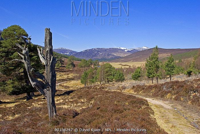 Glen Lui in April looking northwest towards the Cairngorms, Deeside, Scotland, UK  -  David Kjaer/ npl