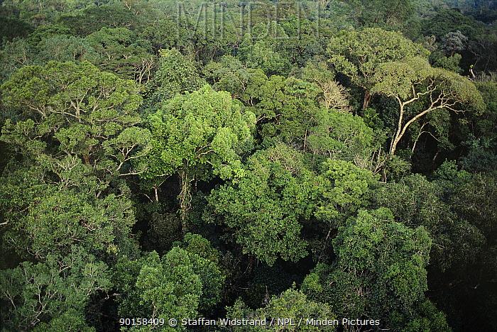 Rainforest canopy aerial, Manaus, Amazonia, Brazil  -  Staffan Widstrand/ npl