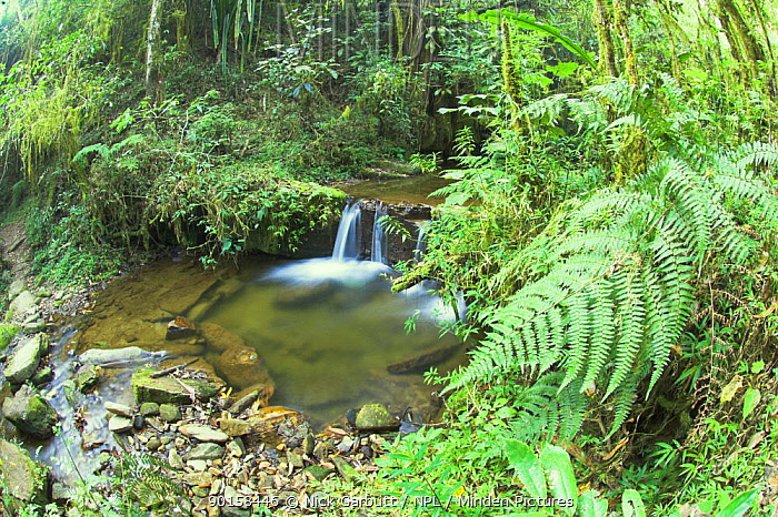 Stream and vegetation in montane rain forest, Ranomafana National Park, south eastern Madagascar  -  Nick Garbutt/ npl
