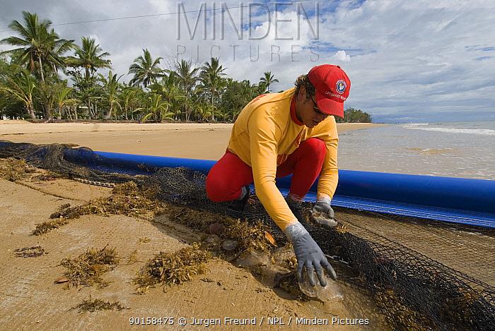 Lifeguard removing Jellyfish from net, after clearing stinger-resistant enclosure, Queensland, Australia  -  Jurgen Freund/ npl