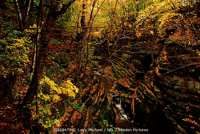 Autumn leaves 'Pewits Nest', Baraboo, Wisconsin, USA  -  Larry Michael/ npl