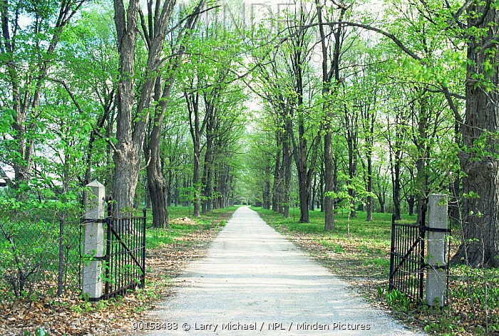 Looking down driveway through gates in spring, Wisconsin, USA, sequence 2, 4  -  Larry Michael/ npl