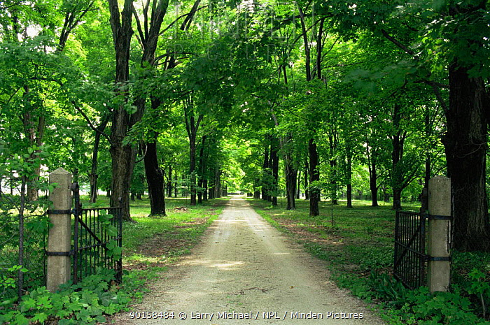 Looking down driveway through gates in summer, Wisconsin, USA, sequence 3, 4  -  Larry Michael/ npl