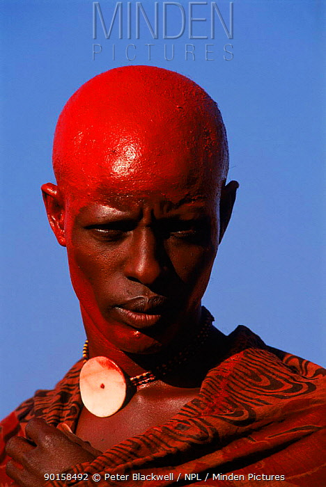 Maasai warrior with head painted in red ochre Eunoto ceremony Mara region, Kenya Head is shaved before colouring 1995  -  Peter Blackwell/ npl
