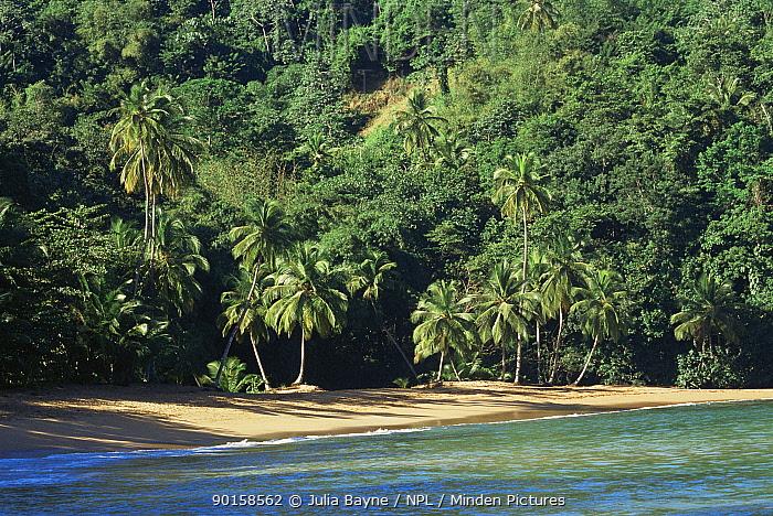 Englishman's Bay landscape, Tobago, West Indies, Caribbean  -  Julia Bayne/ npl