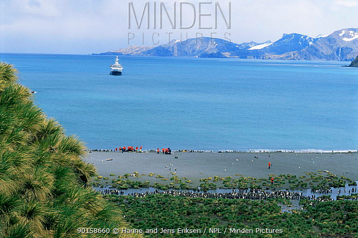 Tourists with King penguins (Aptenodytes patagoni) on Gold harbour beach, South Georgia, South Atlantic Islands  -  Hanne & Jens Eriksen/ npl
