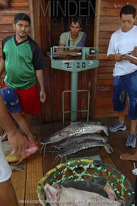 Fish market in Santarem, Para State, Brazil  -  Daniel Gomez/ npl