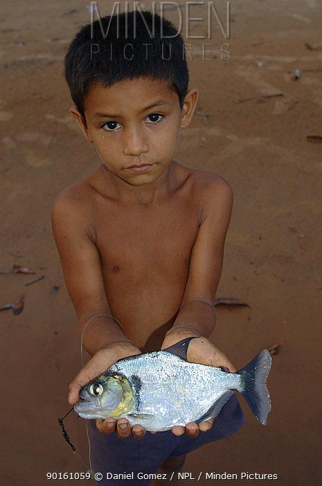 Local boy holding a dead Piranha (Serrasalimidae sp) Para State, Brazil  -  Daniel Gomez/ npl