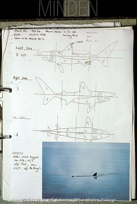 Basking Shark visual tag date sheet and book, Isle of Man, Irish Sea, UK  -  Jeff Rotman/ npl
