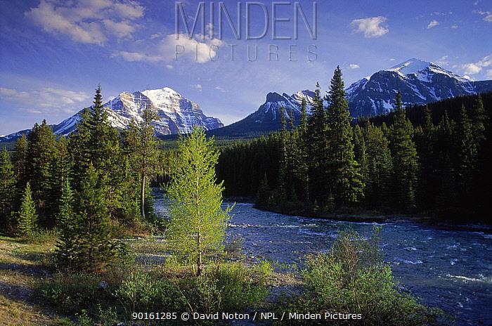 Bow valley, Banff NP, Alberta, Canada  -  David Noton/ npl