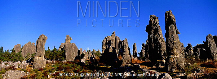 Eroded limestone pinnacles in the Stone forest, Shinling, Yunnan Province China  -  Pete Oxford/ npl